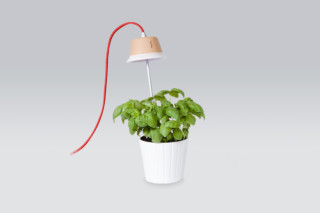 Chlorophyll  by  Linea Light Group