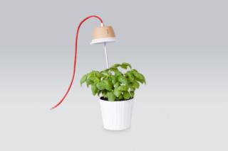 Chlorophyll  von  Linea Light Group