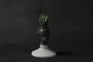 Plant Light  by  Foscarini