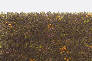 Giverny 2405  by  Kvadrat