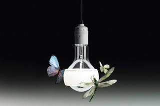 Johnny B. Butterfly  by  Ingo Maurer