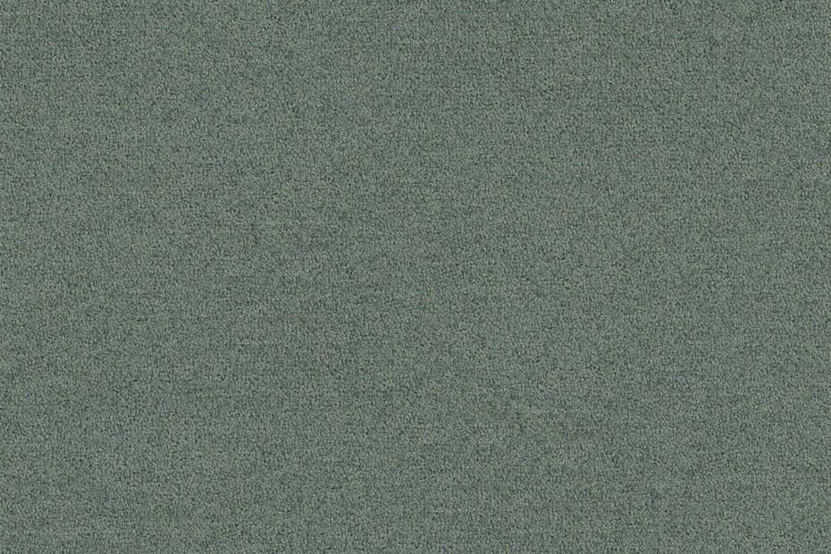 Polichrome Solid
