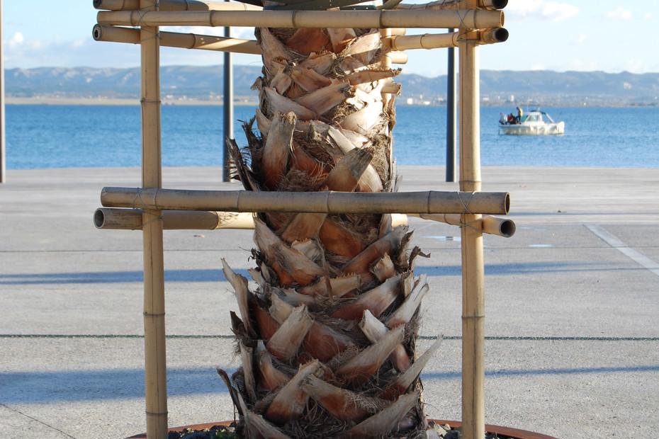 Solea tree grid round