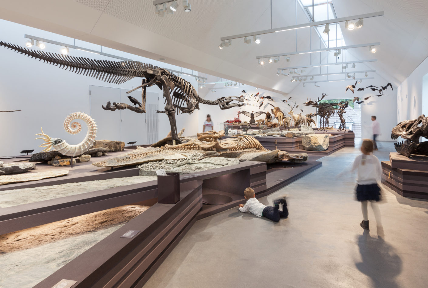 Dinosaur skeletons at the Natural History Museum St Gallen, Meier Hug and Armon Semadeni Architects, Switzerland, 2017