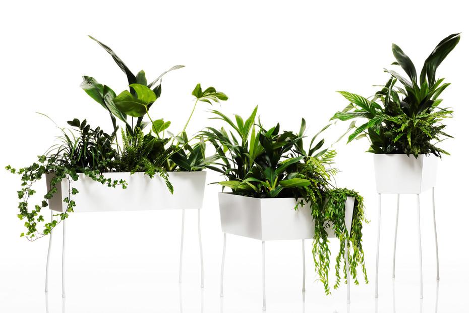 Green Pedestals