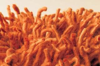 Buffo orange  von  Casalis