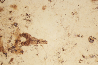 Jurakalkstein rotbunt geschliffen  von  Altmühltaler Kalksteine