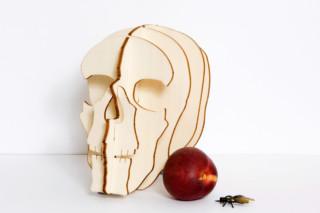 Crâne  von  Domestic