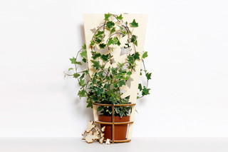 Plant Support  by  Domestic