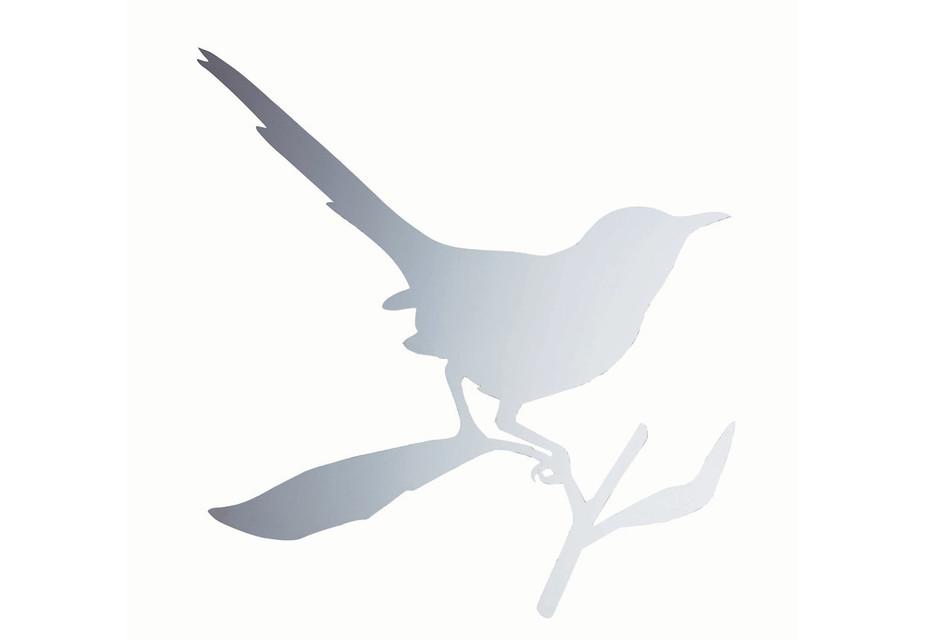 TAYLOR BIRD