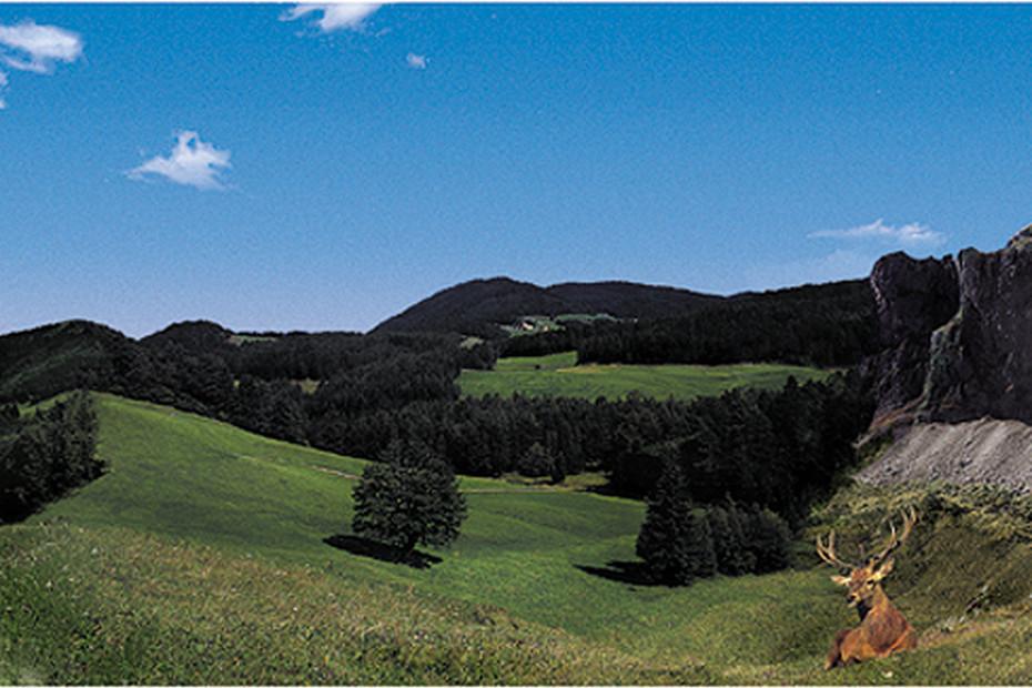 Alpen Borte