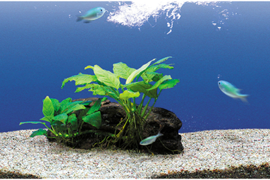 Aquarium Border