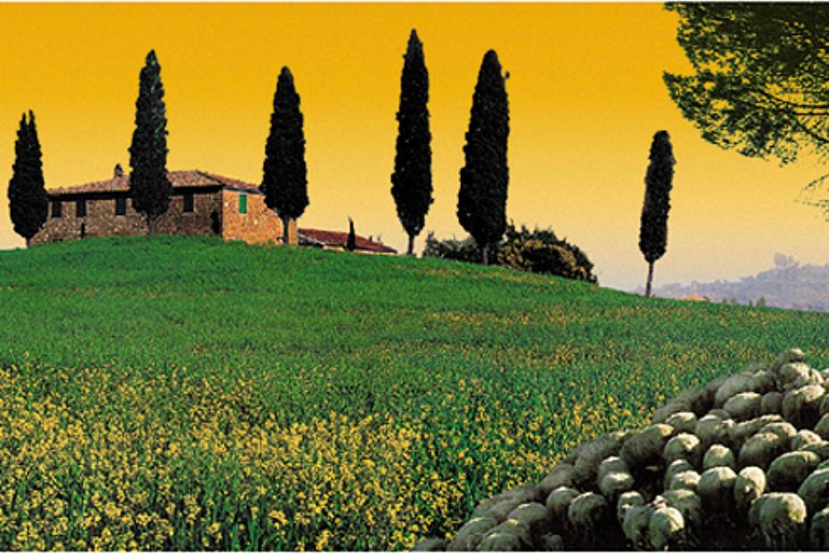 Toskana Border