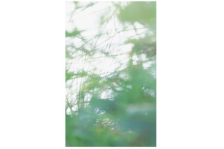 Yasumi Fototapete  von  Extratapete