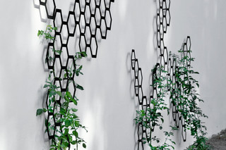 Comb_ination wall cordon  by  FLORA