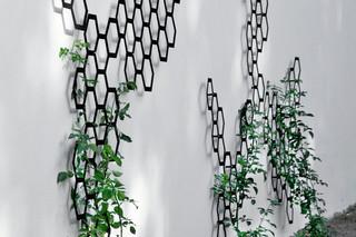 Comb_ination Wandspalier  von  FLORA