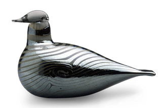 Long-tailed Duck  by  Iittala