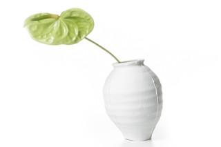 Ming Vase  von  Moooi