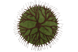 Roots  von  NODUS