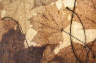 Acer Platanoides  by  NONWOVENS - Sylvia Döhler
