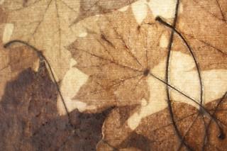Acer Platanoides  von  NONWOVENS - Sylvia Döhler