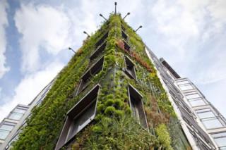 Hotel Athanaeum, London  by  Patrick Blanc Vertical Garden