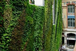 Rue d´Alsace, Paris  by  Patrick Blanc Vertical Garden