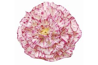 Carnation large  by  Porzellan-Manufaktur Nymphenburg