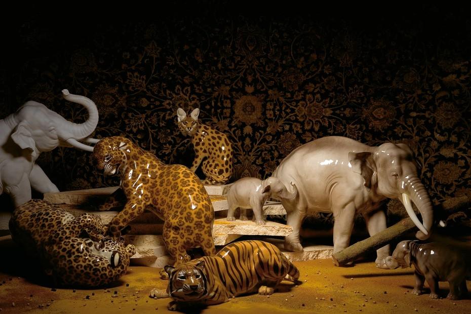 Leopard fighting No.142