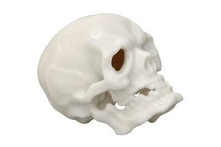 Skull No.624a  by  Porzellan-Manufaktur Nymphenburg