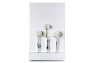 ANNEXorg vase  by  Serafini