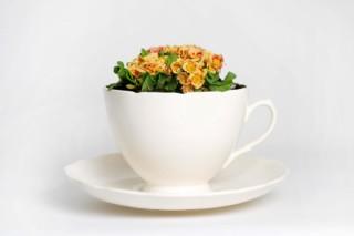 Plant Cup  by  Thorsten van Elten