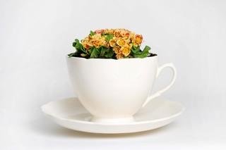 Plant Cup  von  Thorsten van Elten