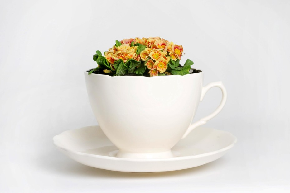 Plant Cup