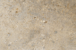 Memphis Ra shell limestone fine sanded  by  TRACO Manufactur